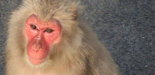 monkey at monkey park Monkey Park Monkey Park monkey at monkey park