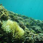 Underwater Wonderland Snorkeling in Izu imgp1674 2