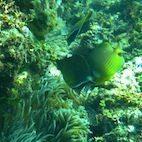 Underwater Wonderland Snorkeling in Izu imgp1681 2